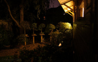 Bonsai Garden At Night