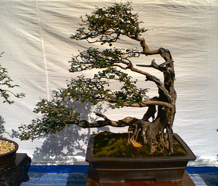 5th PBSI National Bonsai Exhibition