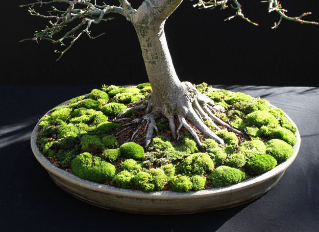 Bonsai Autumn Images 2014
