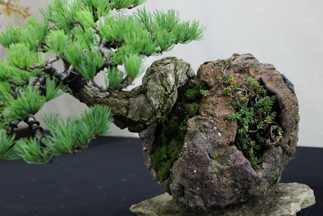 heathrow bonsai show