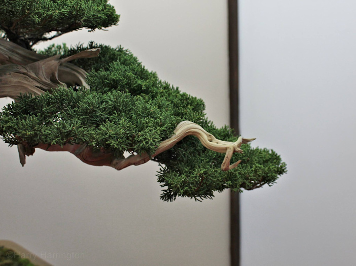 saulieu bonsai show