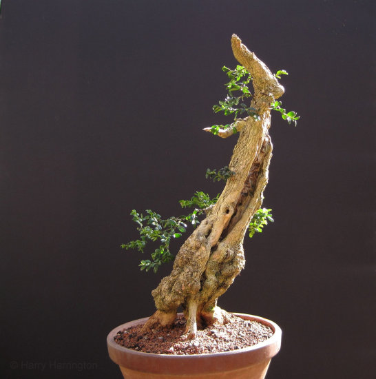 Bonsai winter images