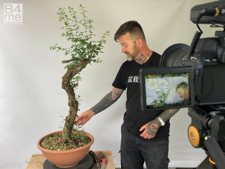 The Launch Of The Developing Coniferous Bonsai Course