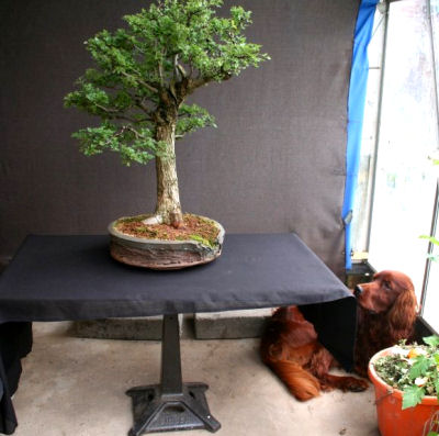photographing bonsai