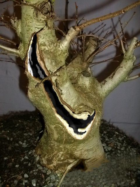 elm bonsai hollow