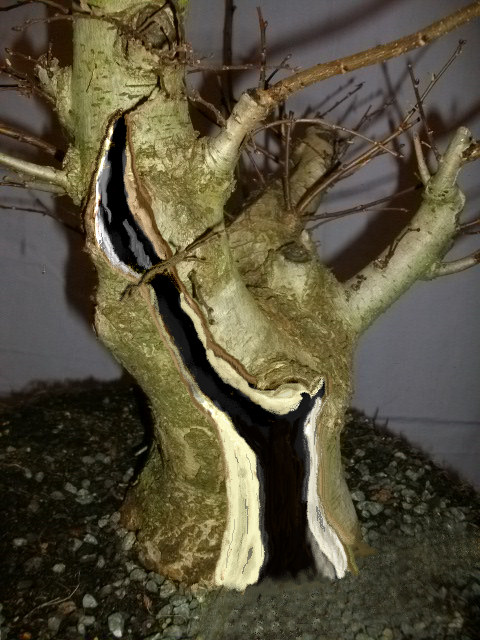 elm bonsai deadwood design