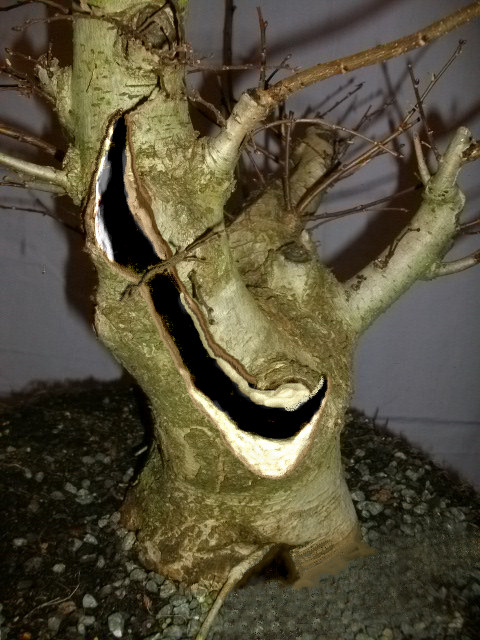 elm bonsai carving