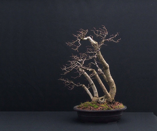I decided to turn the whole bonsai
