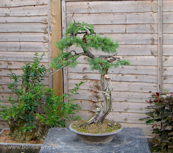 bonsai summer images 2010