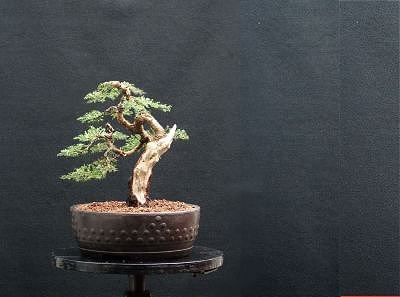 Bonsai and Visual Movement
