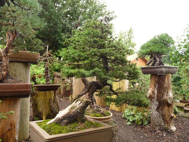 A Visit to the Bonsai Garden of Walter Pall by Luka Musich