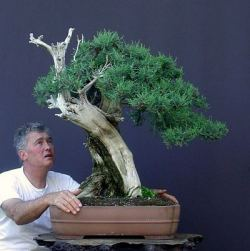 Collecting Trees (Yamadori) from the Wild for Bonsai
