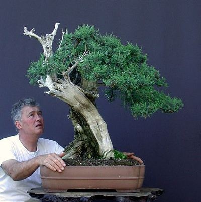 Walter Pall with a huge collected bonsai