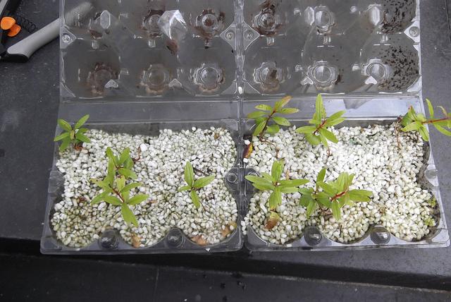 Как вырастить бонсай с семян в домашних условиях