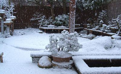 Caring for Bonsai during the Winter