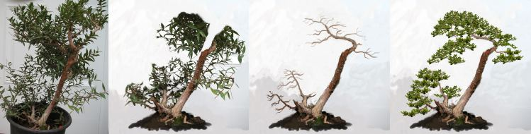 Online Virtual Bonsai Design