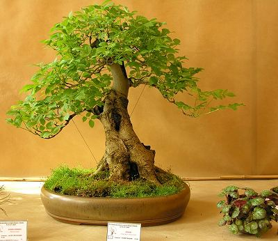 Ksiaz Castle Poland Bonsai Exhibition